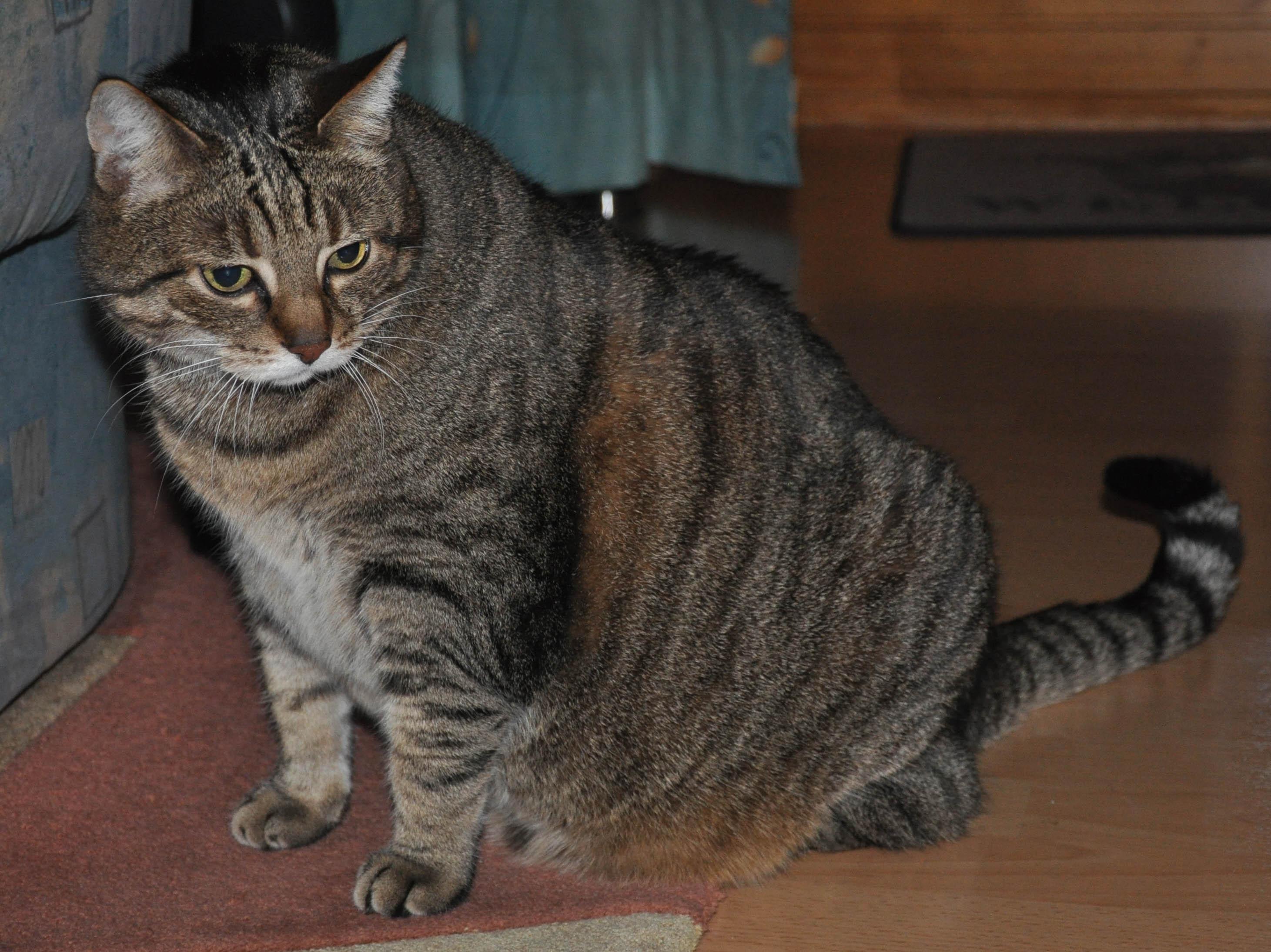 In Ballungsgebieten liegen die Territorien hingegen oft so dicht beisammen, dass es zu Kämpfen, insbesondere unter Katern, kommt. Da erwachsene Katzen in der Regel in etwa gleich groß und stark sind, sind Kämpfe normalerweise nicht lebensgefährlich, können aber zu ernsthaften Blessuren führen.