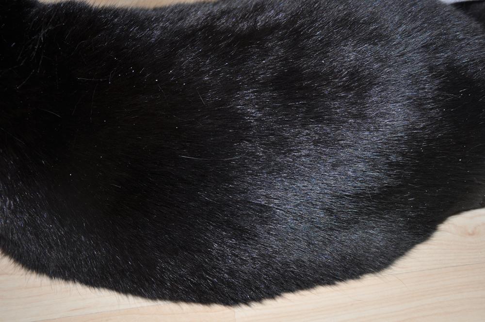 erfahrungsberichte katzenfutter aus hanf 100. Black Bedroom Furniture Sets. Home Design Ideas